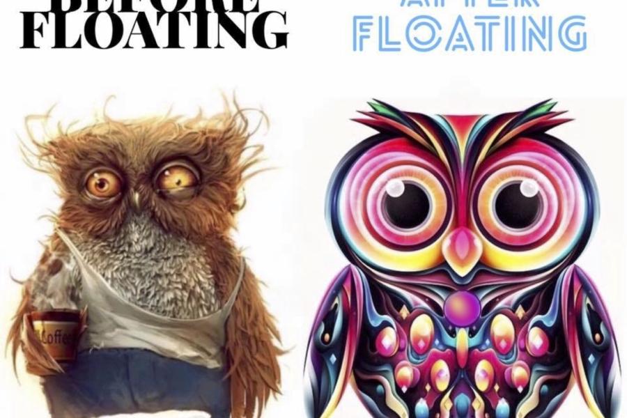 Owls Final